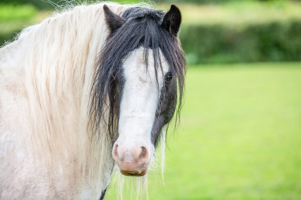 A black and white pony