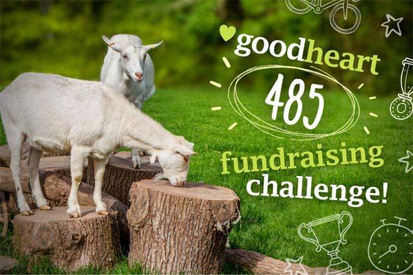 Goodheart 485 Virtual Fundraising Challenge