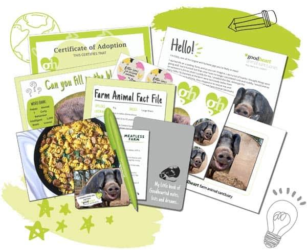 Kid's pig adoption box