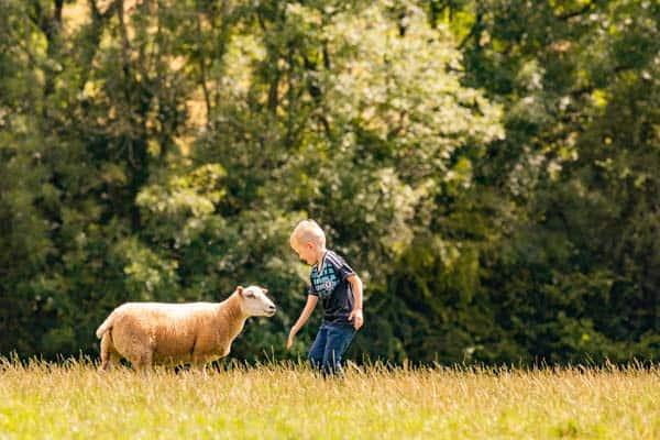 Goodheart Animal Sanctuary Summer Open Day 2021