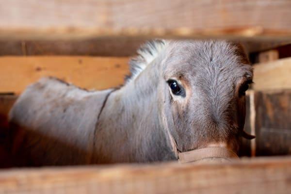 Horse and pony welfare