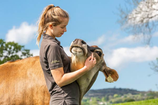 Izzy and Duncan the cow at Goodheart Animal Sanctuary