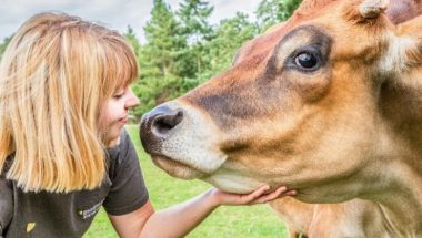 Claire-cow