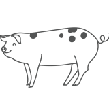 A playful line drawing of a pig